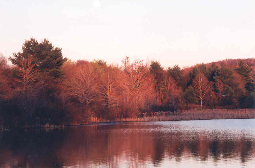 fall-trees-across-lake.jpg