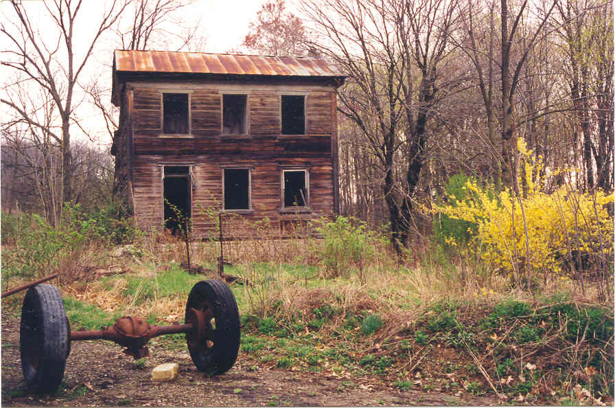 hollow-house-forsythia.jpg